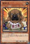 横綱犬(ヨコチュナ)